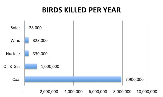 bird kills